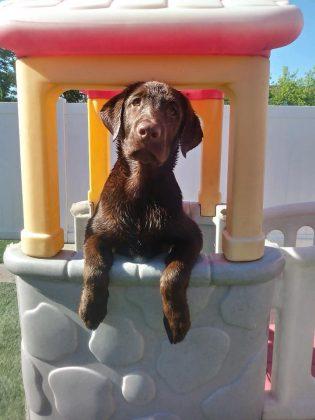 Lucky Dog Daycare 3