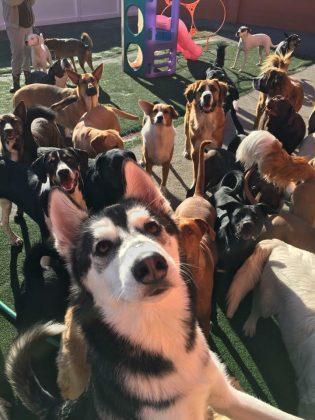 Lucky Dog Daycare 1
